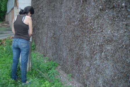 Jilma Estrada Zúñiga - Nicaragua Espaci10