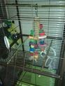 Les installations de vos oiseaux Img_2011