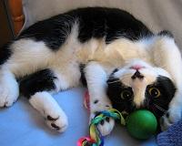 Forum  amis des chats et des animaux Bon_di14