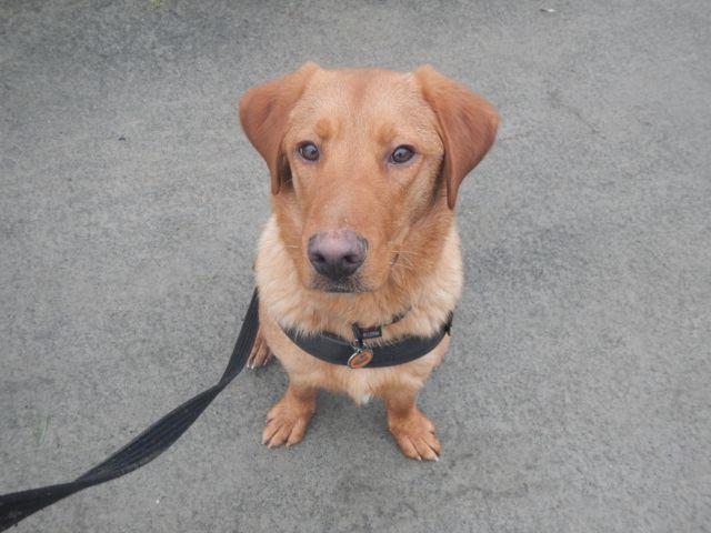 Choisir un chien adulte - Page 4 Dscn1313