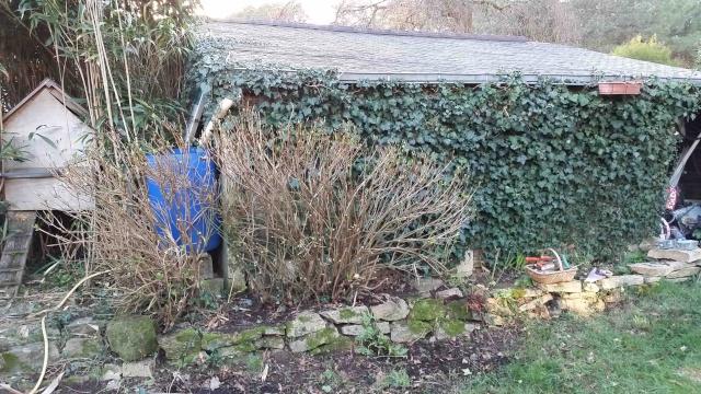 Dans le jardin aujourd'hui ... Horten11