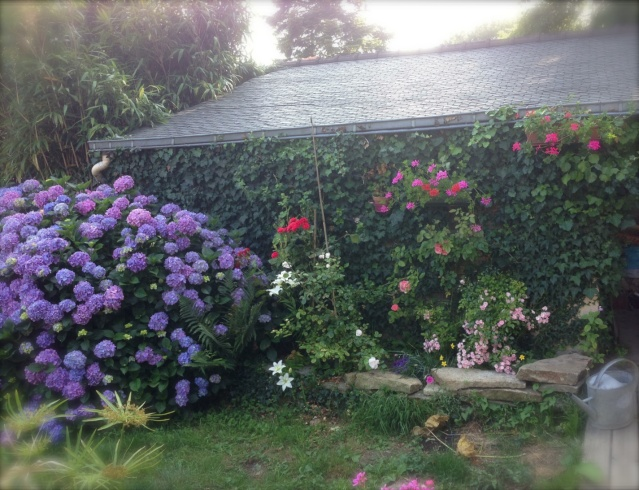 Dans le jardin aujourd'hui ... Jardin10
