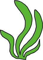 L'algue Algue10