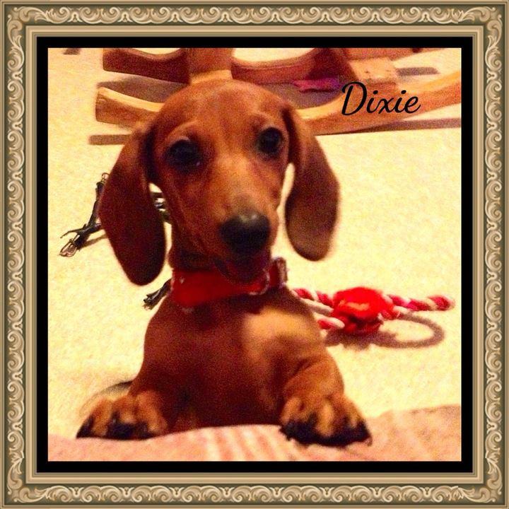 Dixie la saucisse Avatar10