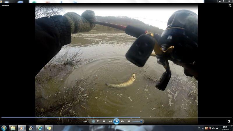 Vos sorties de pêche en Janvier 2015 - Page 2 Silure10
