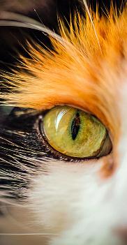 Blood ~ Ou comment une simple chatte vit sa vie paradisiaque se transformer en enfer Praz_c10