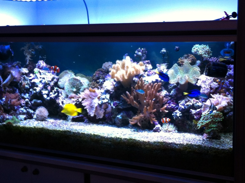 Projet Aqua 450 litres avec ARDUINO - Page 6 411