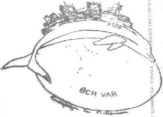 * VAR (1983/....) * 202-0412
