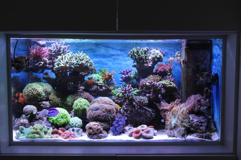 Le nouveau Reef d'Alexpilon, 600l custom - Page 20 Img_0810