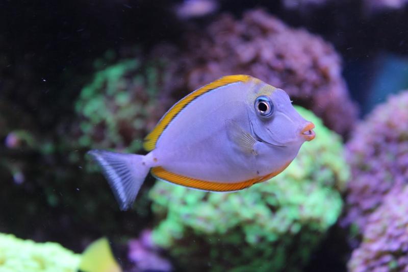 Le nouveau Reef d'Alexpilon, 600l custom - Page 20 Img_0811
