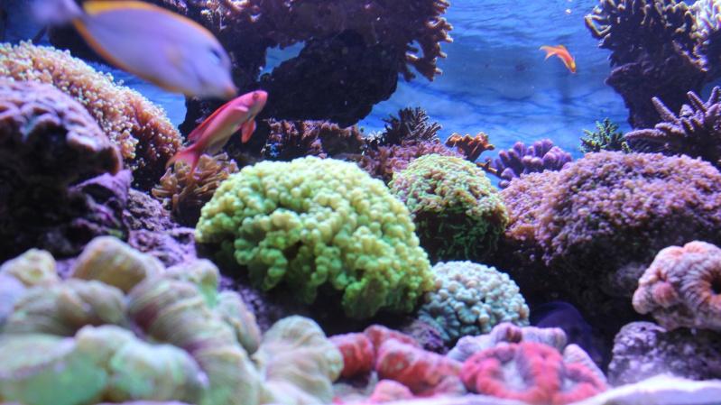 Le nouveau Reef d'Alexpilon, 600l custom - Page 20 Img_0911