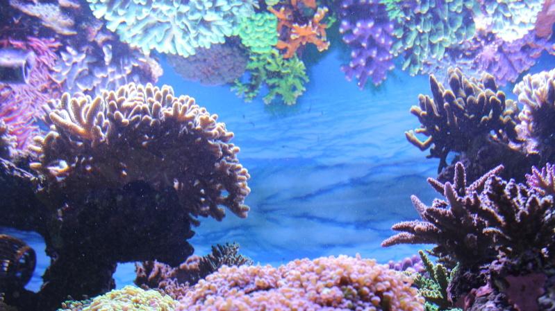 Le nouveau Reef d'Alexpilon, 600l custom - Page 20 Img_0912