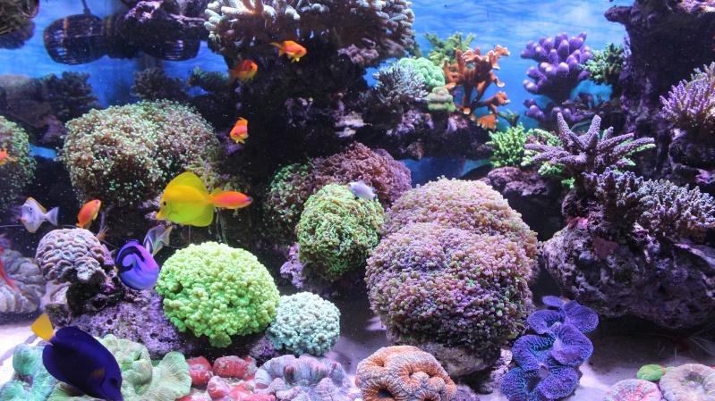 Le nouveau Reef d'Alexpilon, 600l custom - Page 20 Img_0914