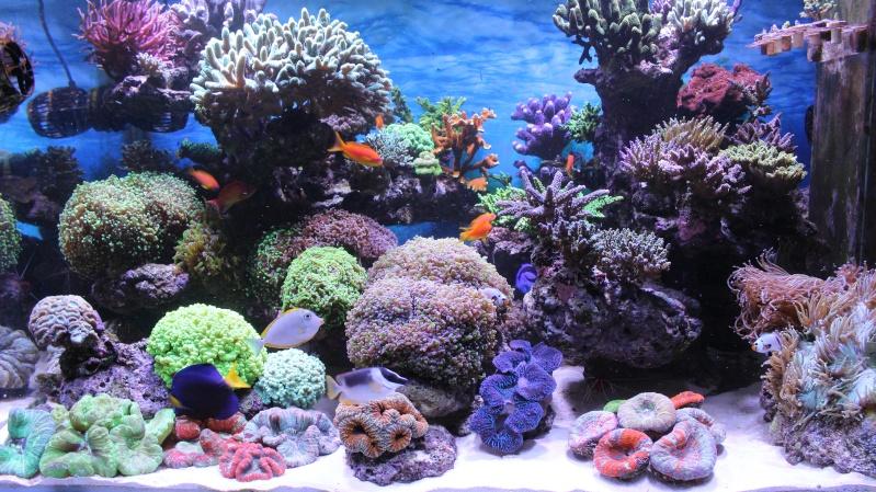 Le nouveau Reef d'Alexpilon, 600l custom - Page 20 Img_0916