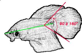 Différence entre le overhalfmoon et le superdelta Dt21010