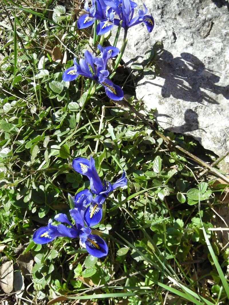La nature se réveille, le printemps annonce son retour! Dscn3322
