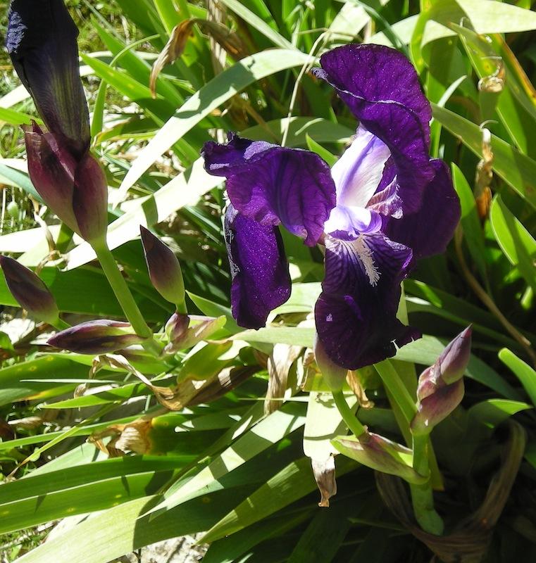 La nature se réveille, le printemps annonce son retour! Dscn3323