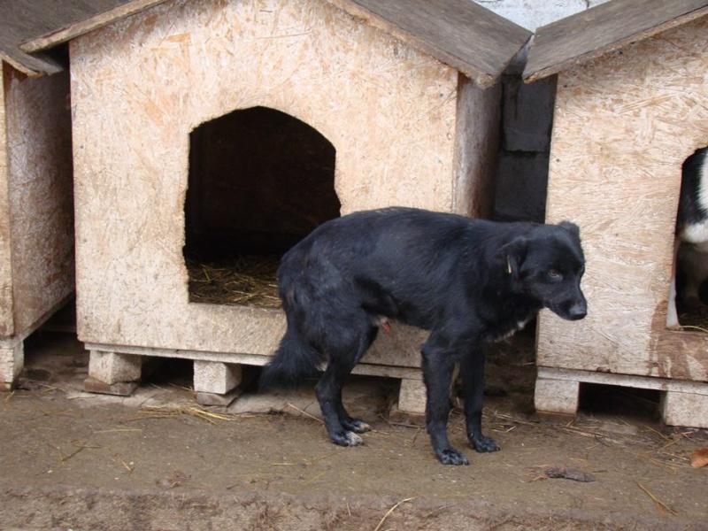 DICKY, M-X, taille moyenne, né 2010 env (Tamara CLINIQUE) GENTIL LOULOU - parrainé réservé Cent Pas Dicky010