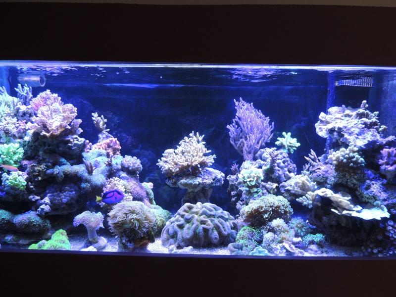 mon 300L eau de mer - Page 3 Dscn5013