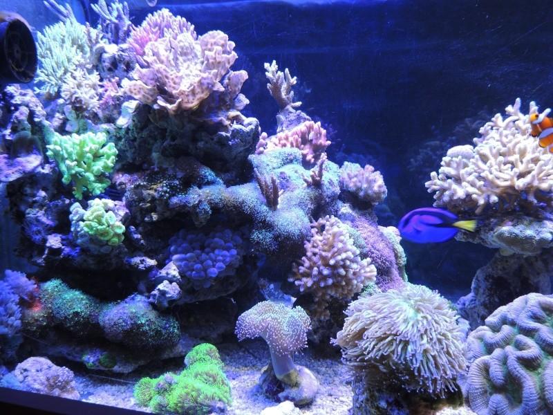 mon 300L eau de mer - Page 3 Dscn5015