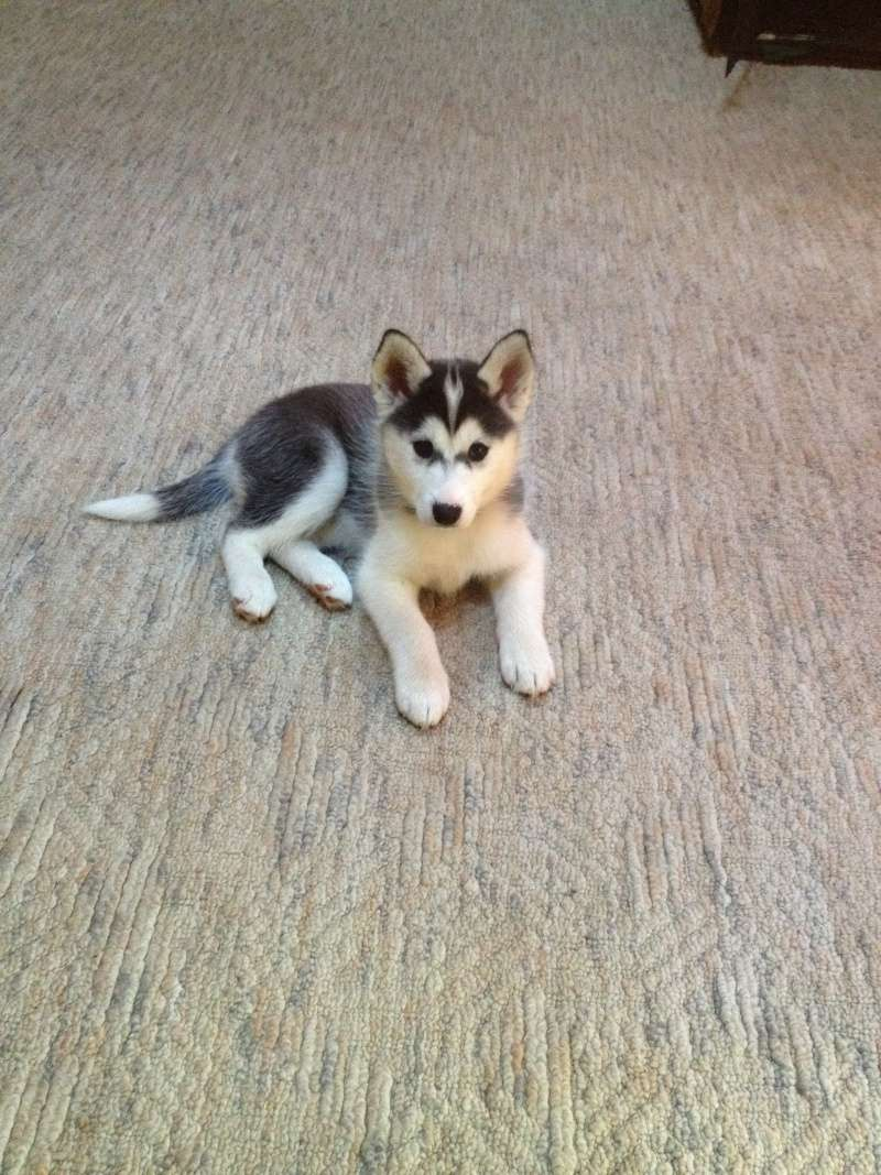 question about new pup!!! 10171310