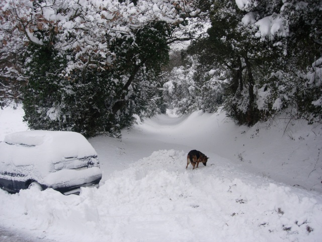 """Concours """"Paysage d'hiver avec animal"""" - Page 2 Dscn0710"""
