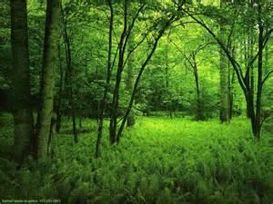 Green Opening Hvp_pl13
