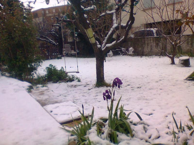 Déjà des fleurs... Iris_s12