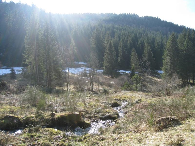 Pêche de la truite en rivière (vosges). Img_3711