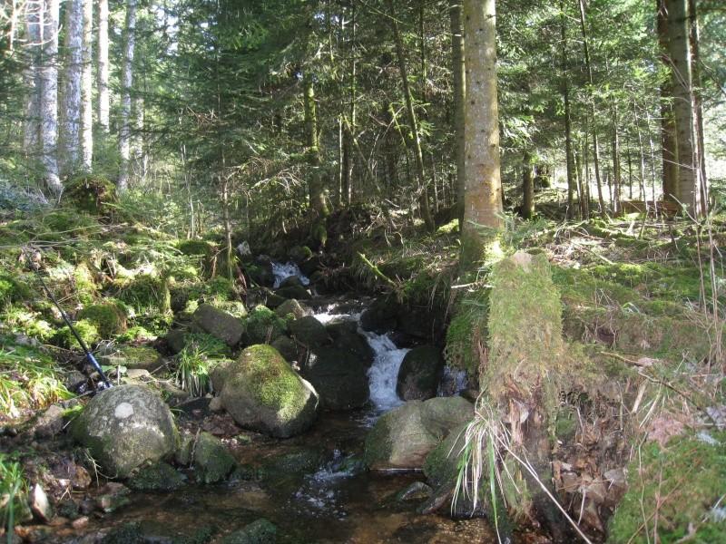 Pêche de la truite en rivière (vosges). Img_3712