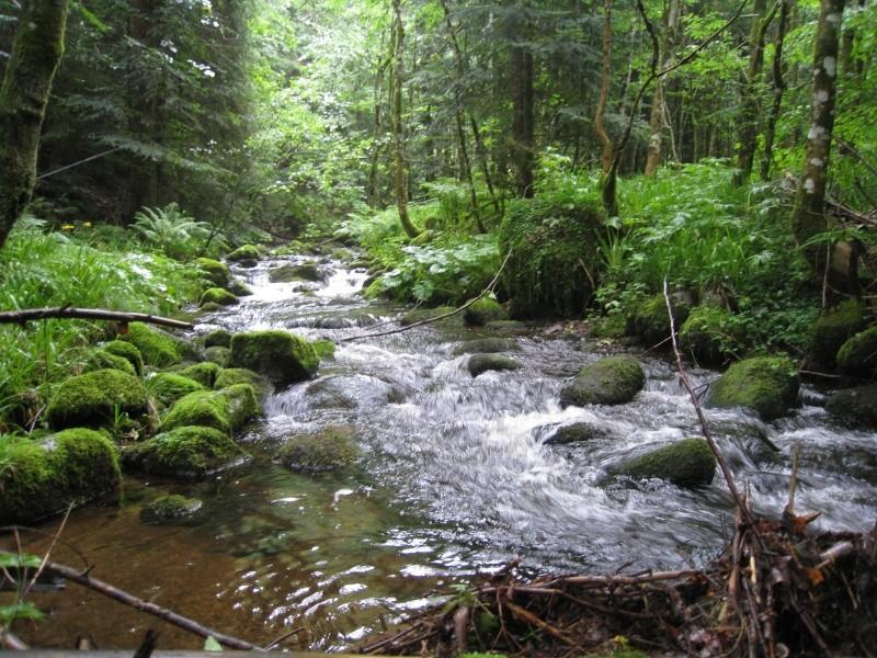 Pêche de la truite en rivière (vosges). Img_3812