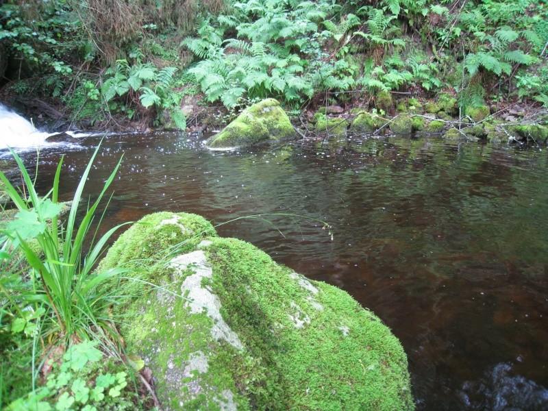 Pêche de la truite en rivière (vosges). Img_3814