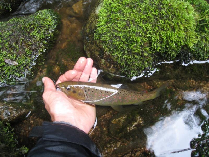 Pêche de la truite en rivière (vosges). Img_3816