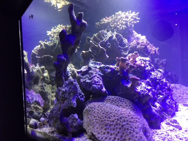Un petit coin de récif (55litres) Img_2213