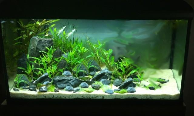 Présentation de mes aquariums - Page 5 210