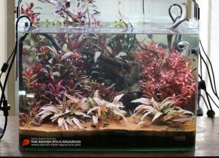 Présentation de mes aquariums - Page 3 Danish10