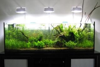 Présentation de mes aquariums - Page 3 Img_0710