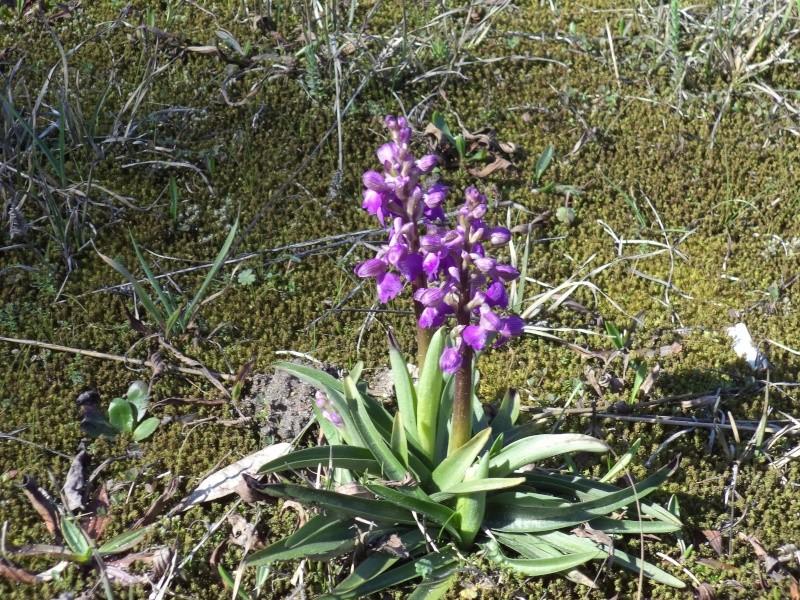 saison orchidophile 2015 Dsc00619
