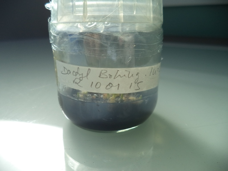 un peu de labo Dsc00624
