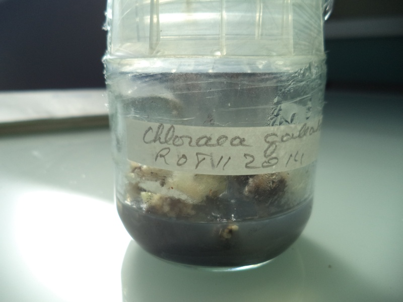 un peu de labo Dsc00628
