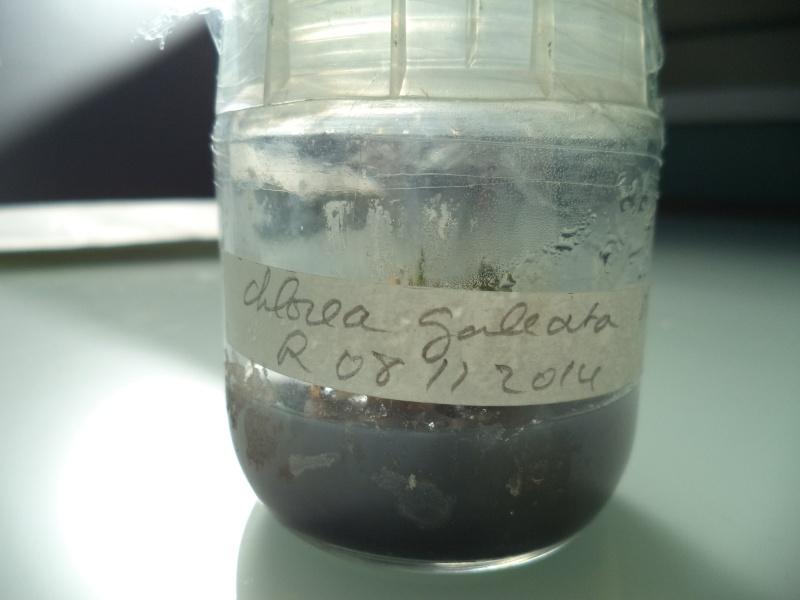 un peu de labo Dsc00636