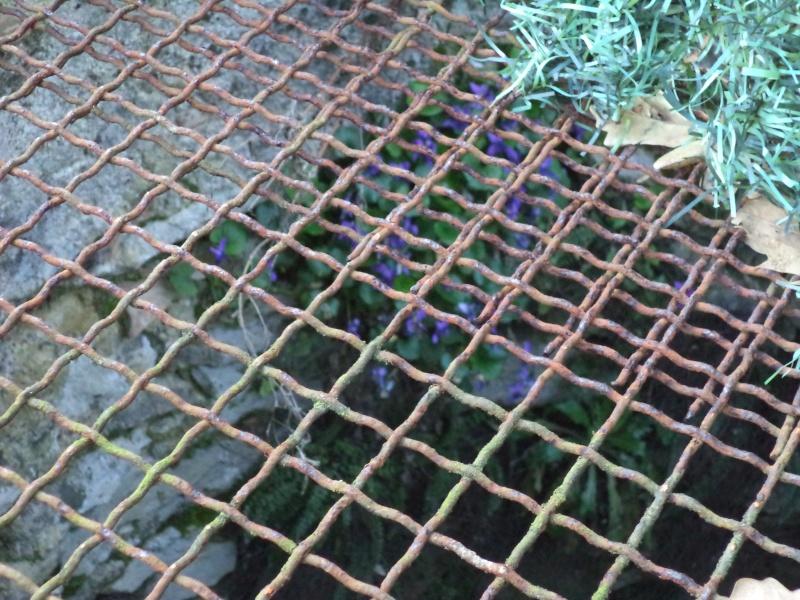 des violettes Dsc00649