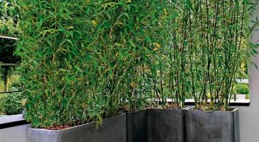 Balcon et vis à vis Bambou10