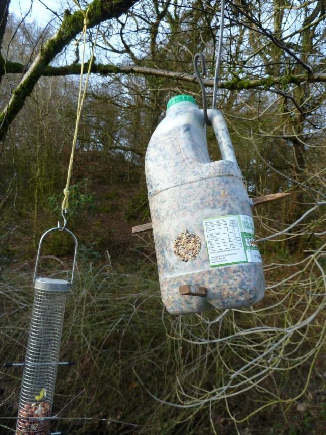 Milk Bottle Bird Feeder P1010312