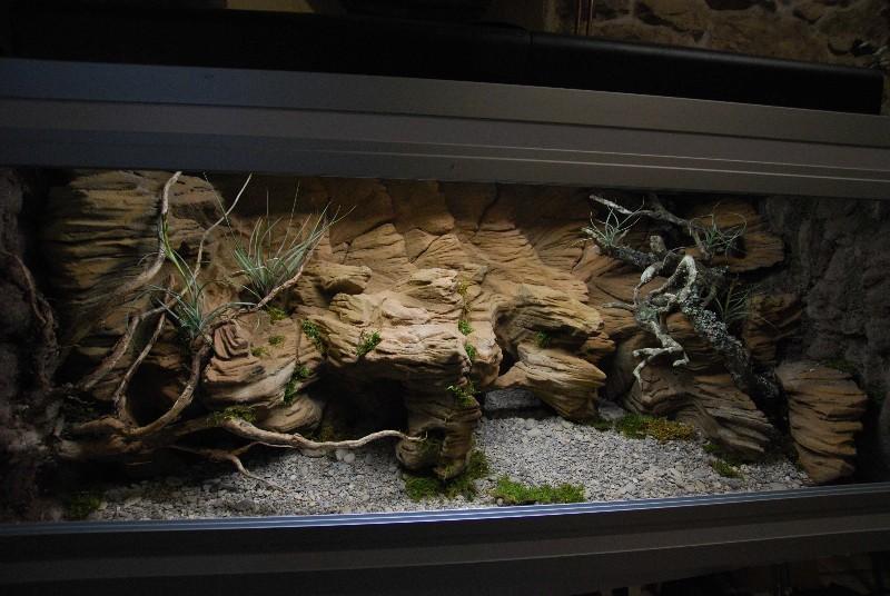 Terrarium gecko  14032510