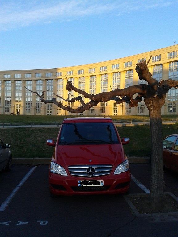 Méfiez vous aussi des arbres à Montpellier !!! 20150211