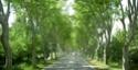 Nationale 7 : 1000 km de voyage (sujet participatif) - Page 2 Arbres11