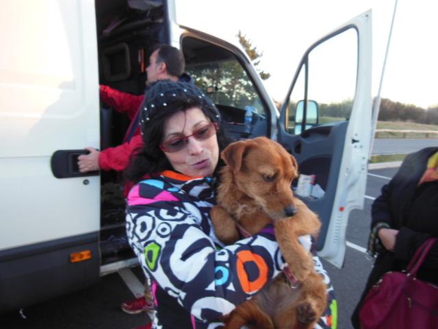 Ardilla petite croisée  à l'adoption Scooby France Adoptée  Dscn7919