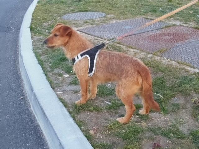 Ardilla petite croisée  à l'adoption Scooby France Adoptée  Dscn7920