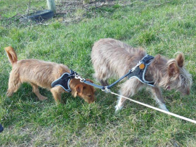 Ardilla petite croisée  à l'adoption Scooby France Adoptée  Dscn8011